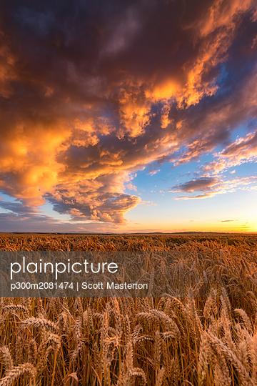 United Kingdom, East Lothian, wheat field at sunset - p300m2081474 by Scott Masterton