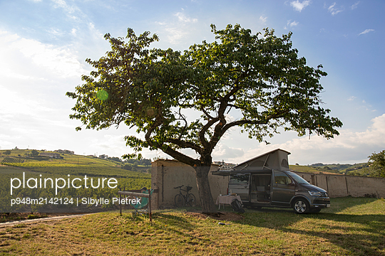 Camping bus under a big tree in front of a vineyard - p948m2142124 by Sibylle Pietrek
