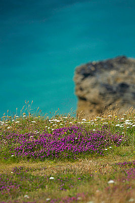 High angle view of flowers at the coast, England - p3486122 by Hans Wretling