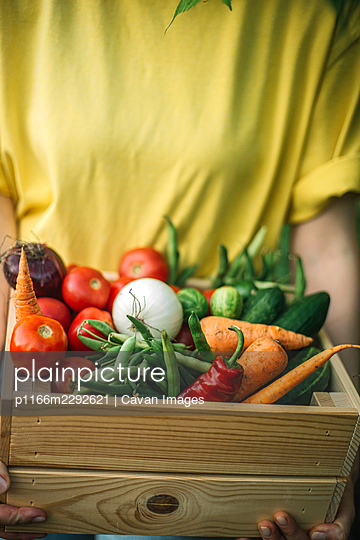 Woman holding  freshly harvested vegetables in crate at organic - p1166m2292621 by Cavan Images
