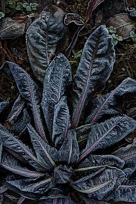 Frozen plant - p1028m1516781 von Jean Marmeisse