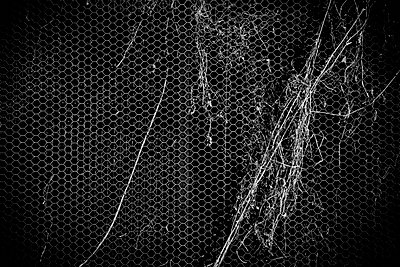 Metal mesh of a chicken coop - p1072m941476 by Tal Paz-Fridman photography
