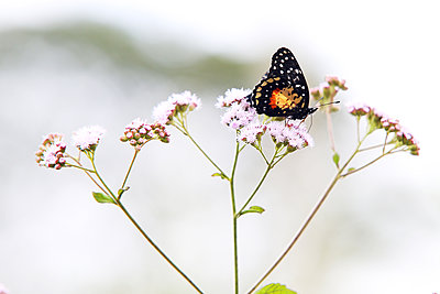 Butterfly on a flower - p1643m2229339 by janice mersiovsky