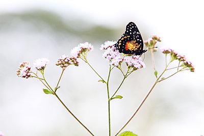 Schmetterling auf einer Blume - p1643m2229339 von janice mersiovsky