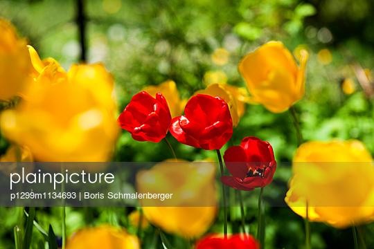 Flowerbed - p1299m1134693 by Boris Schmalenberger