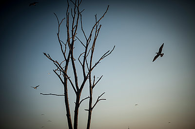 Tree and birds - p1007m1134876 by Tilby Vattard