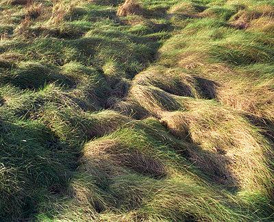 Langes Gras - p2600002 von Frank Dan Hofacker