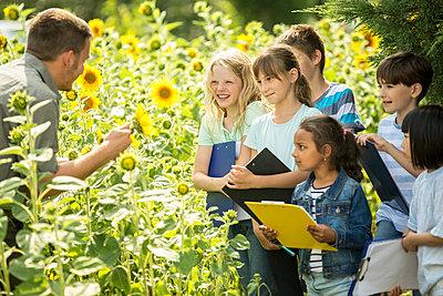 School children learning about nature in a sunflower field - p300m2160367 von Fotoagentur WESTEND61