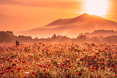 Mt. Tsukuba and poppy field - p514m1483952 by TAKASHI KOMATSUBARA