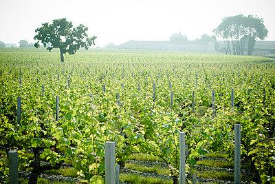 Vineyard - p623m1125445f by Isabelle Rozenbaum