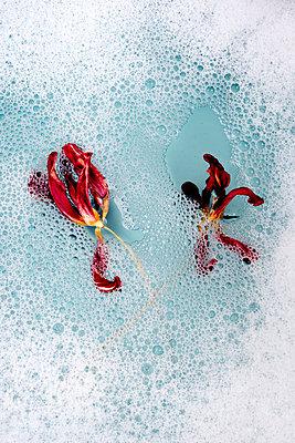 p451m2071259 by Anja Weber-Decker