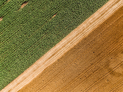Serbia, Vojvodina, agricultural fields, aerial view at summer season - p300m1562710 by oticki
