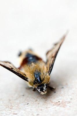 Moth - p4510566 by Anja Weber-Decker