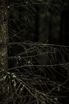 Dark forest - p971m911963 by Reilika Landen