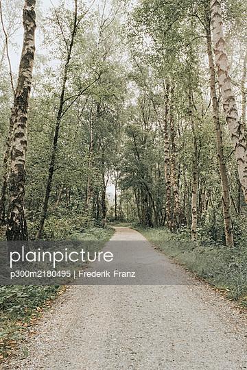 Netherlands, Schiermonnikoog, path through the forest - p300m2180495 by Frederik Franz