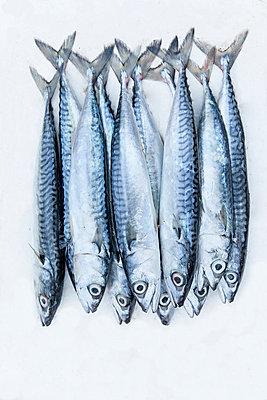Nine sardines - p1093m855426 by Sven Hagolani