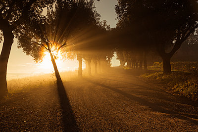 Italy, Tuscany, Val d'Orcia, tree-lined road in morning fog - p300m1206382 by Christina Falkenberg