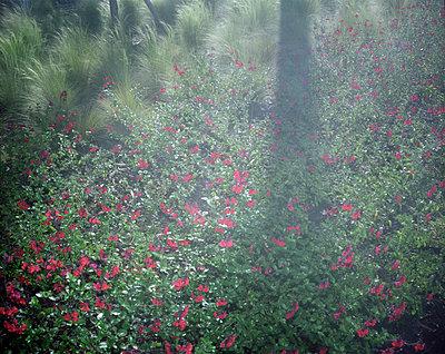 Blumenwiese - p945m924075 von aurelia frey