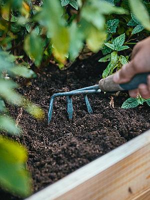 Gardening with the Garden hand rake - p962m2175370 by Robert Schlossnickel
