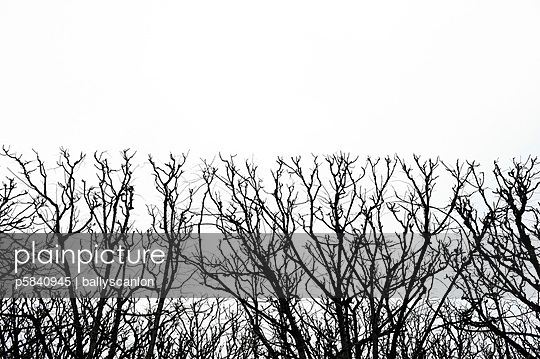 Cut trees - p5840945 by ballyscanlon