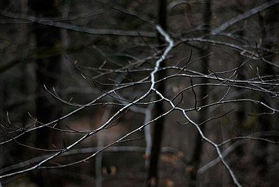 Branch - p1153m951238 by Michel Palourdiau