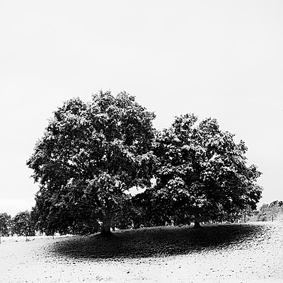 Two ols trees - p1696m2294510 by Alexander Schönberg