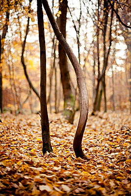 Herbst - p9460004 von Maren Becker
