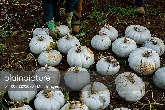 10/19/2020 - p1100m2292673 by Mint Images