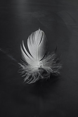 Feather - p1228m1041423 by Benjamin Harte