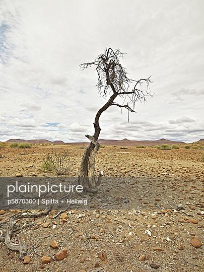 Toter Baum - p5870300 von Spitta + Hellwig