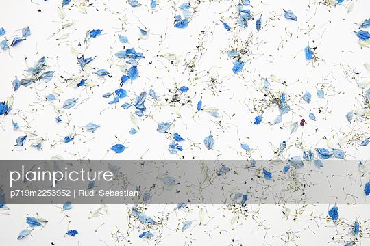 p719m2253952 by Rudi Sebastian