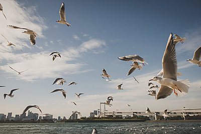 Seagulls in Tokyo - p1345m2055587 by Alexandra Kern