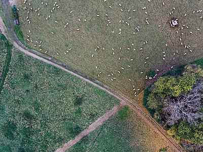 Schafherde auf dem Land, Luftaufnahme - p586m1088290 von Kniel Synnatzschke
