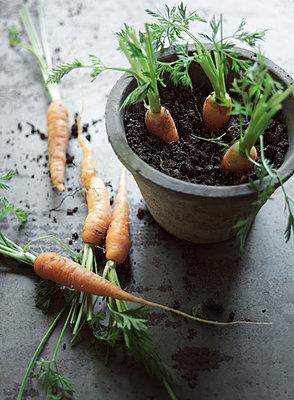 Karotten im Blumentopf - p922m2071493 von Juliette Chretien