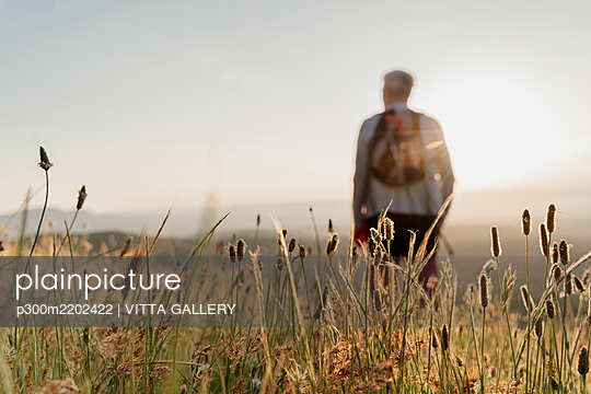 Close-up of dry cattail plants with senior man hiking during sunset - p300m2202422 by VITTA GALLERY