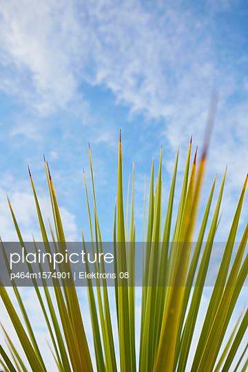 Palme - p464m1574901 von Elektrons 08