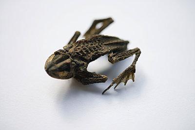 Frosch Mumie 2 - p067m1131811 von Thomas Grimm
