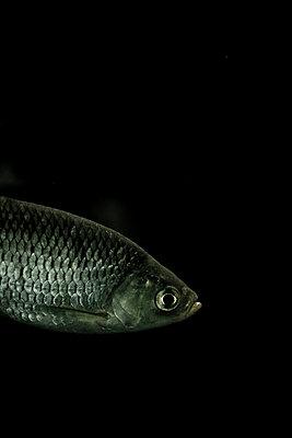 Little fish - p4451359 by Marie Docher