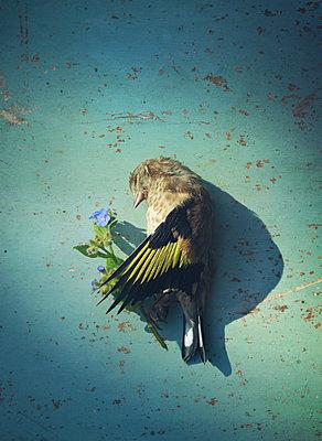 bird and flower - p984m2245133 von Mark Owen