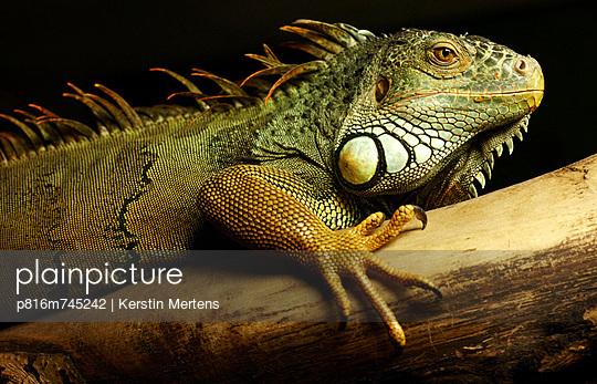 p816m745242 von Kerstin Mertens