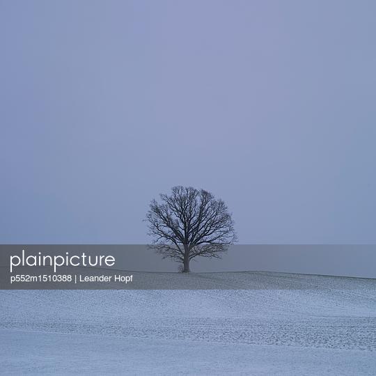 Single tree and fresh snow - p552m1510388 by Leander Hopf
