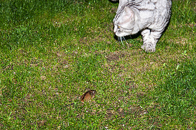 Cat and mouse - p7390743 by Baertels