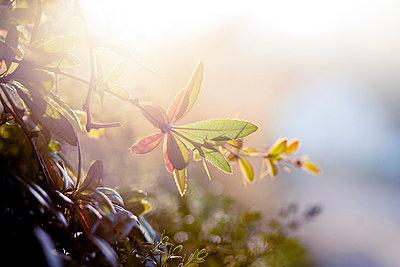 Herbst - p9460055 von Maren Becker