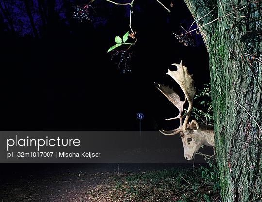 Deer crossing - p1132m1017007 by Mischa Keijser