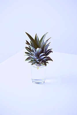 Grow a pineapple - p1149m1582712 by Yvonne Röder