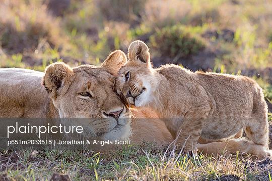 p651m2033518 von Jonathan & Angela Scott