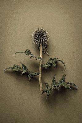 Garden weeds - p1228m1461188 by Benjamin Harte