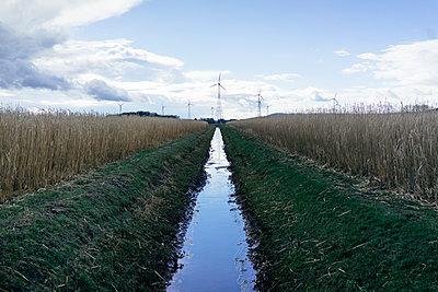 Wassergraben zwischen Kornfeldern - p586m1109838 von Kniel Synnatzschke