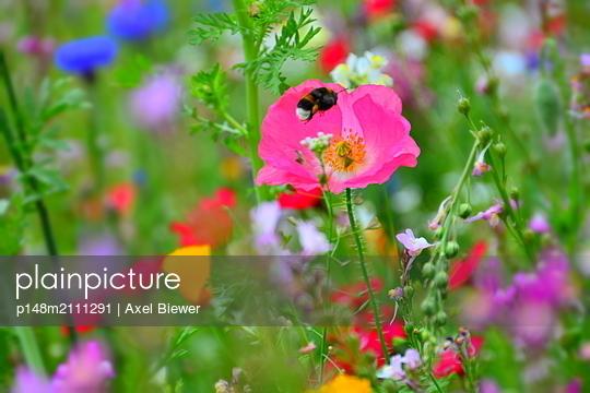 Blumenwiese - p148m2111291 von Axel Biewer