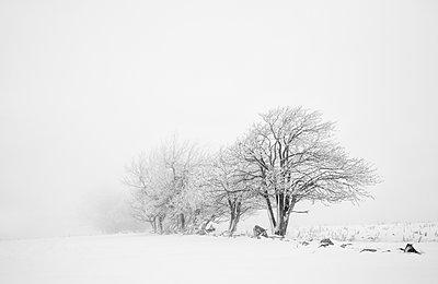 Winterlandschaft - p992m2055074 von Carmen Spitznagel